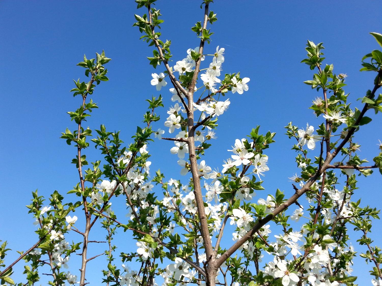 Cherry blossoms got a big phat apple bottom booty - 3 part 9