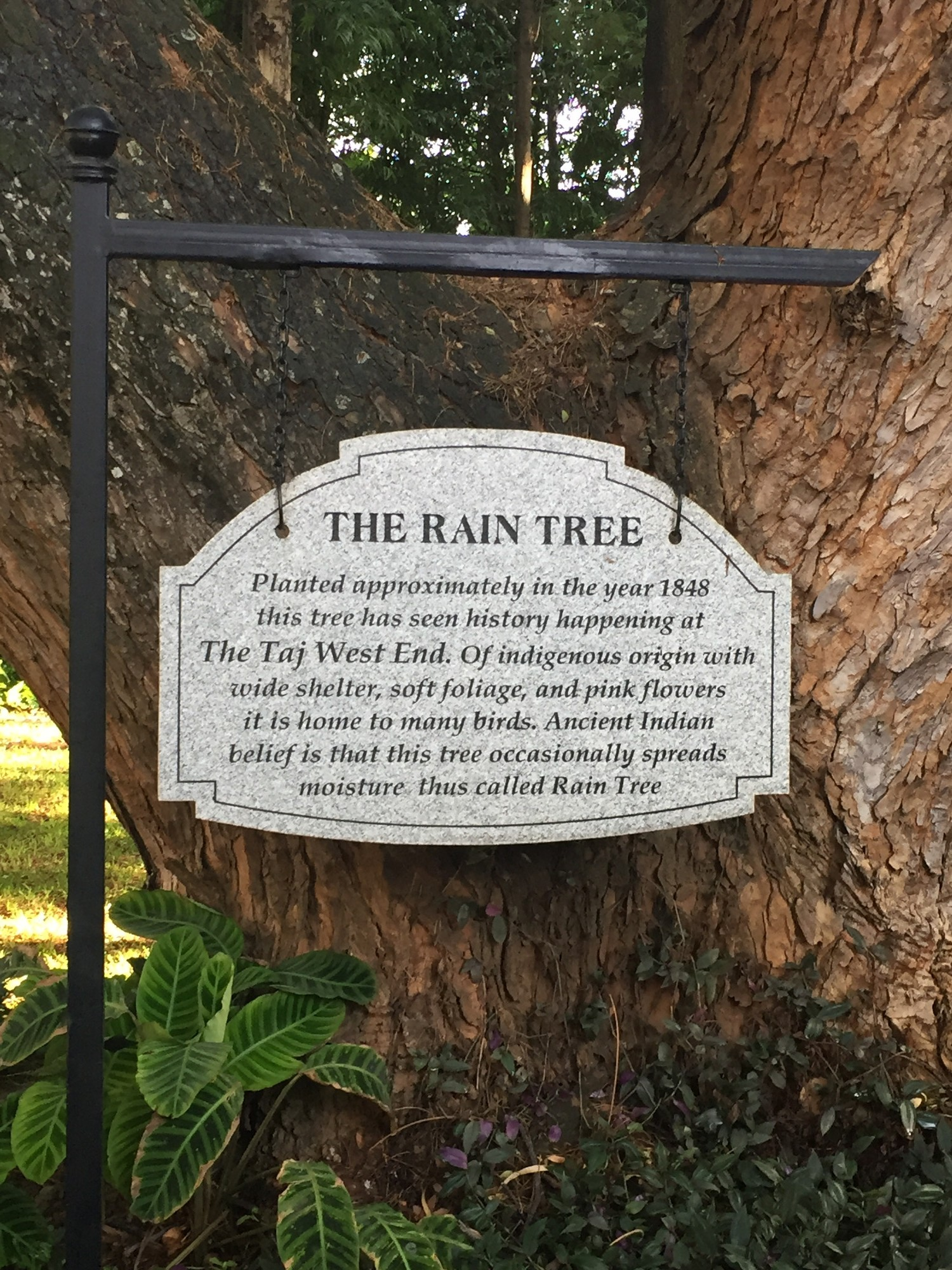 bangalore - Rain tree - explanation