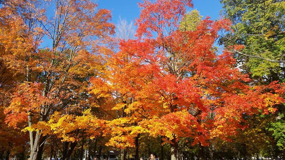 Toronto - High Park - a #travel #guide to #Toronto