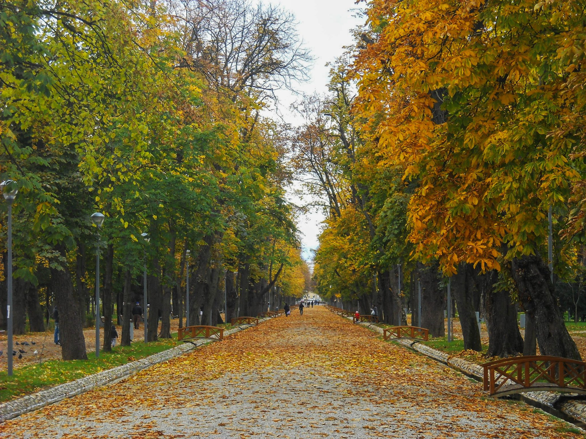 Main alley through the park - A complete travel guide to Cluj-Napoca