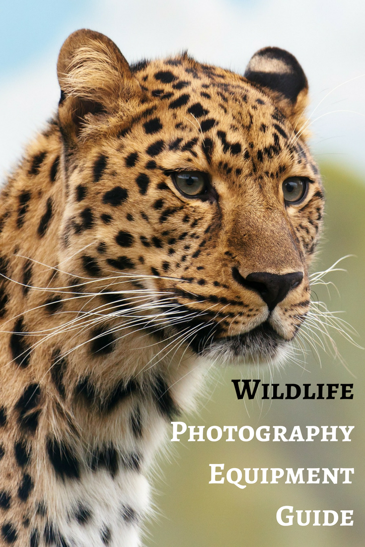 Wildlife Photography Equipment Guide