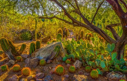 What to Do in Phoenix, Arizona