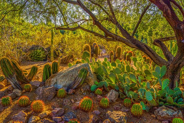 Desert Botanical Garden - Phoenix - What to do in Phoenix
