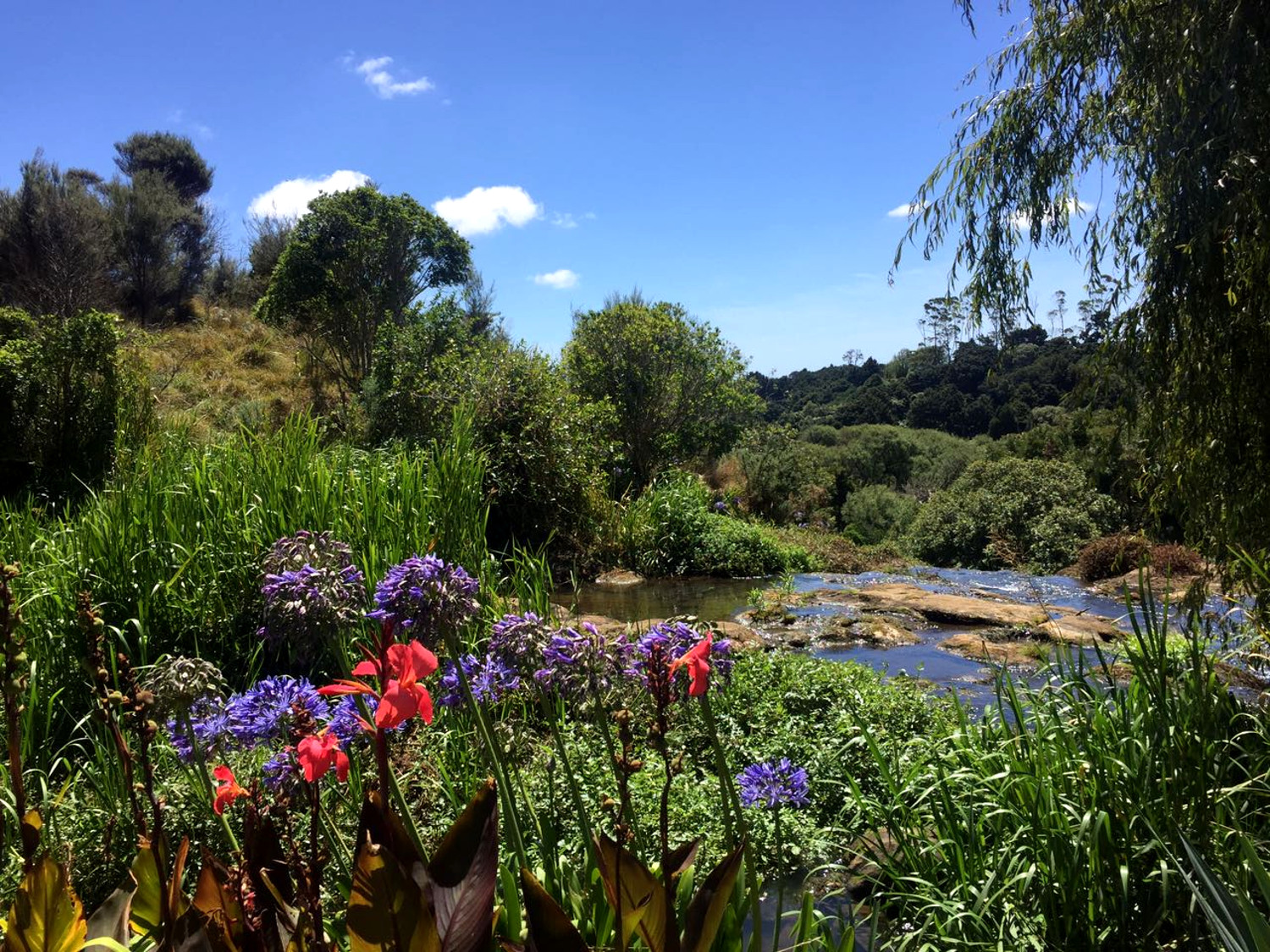 Wrights Water Garden - A local's travel guide to Auckland, New Zealand