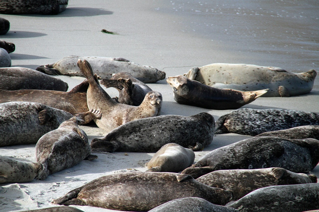 Sea lions, La Jolla, San Diego
