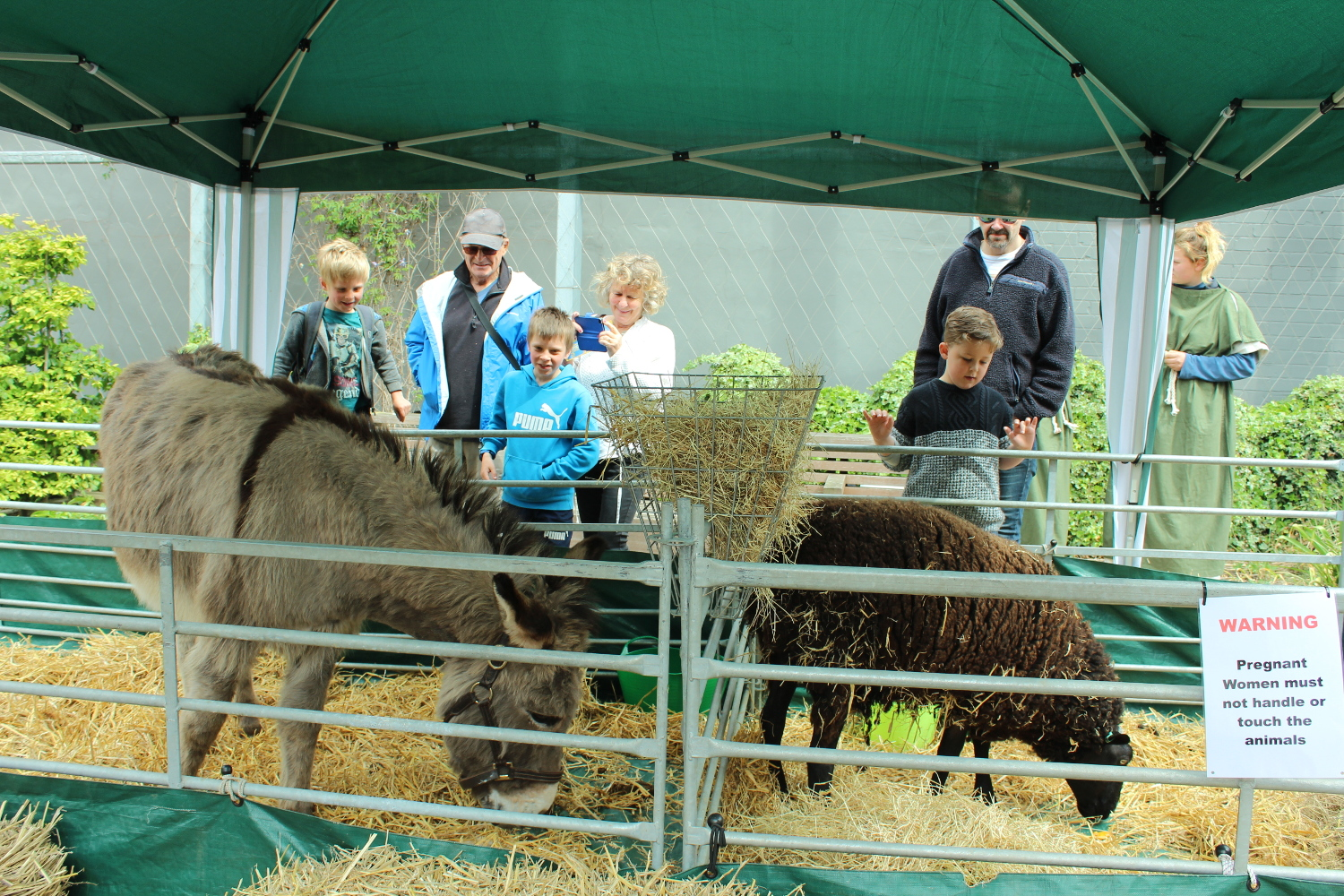 Livestock at the International Hanse Day event in Hull