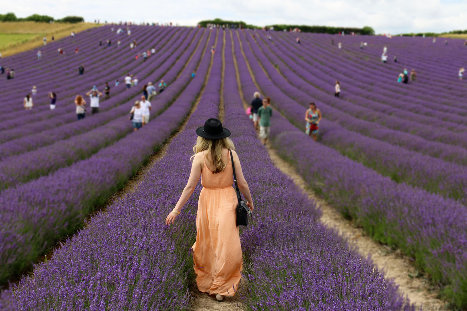 Lordington Lavender - a local's guide to Chichester, England