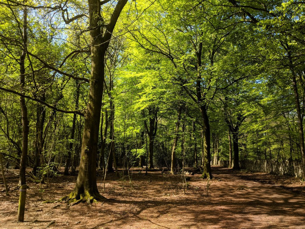 Leigh Woods, Bristol. Discover what to see in Bristol and what to do in Bristol from this insider's guide to Bristol, England. #bristol #england #uk #bristoltraveling #travelbuide #bristolguide