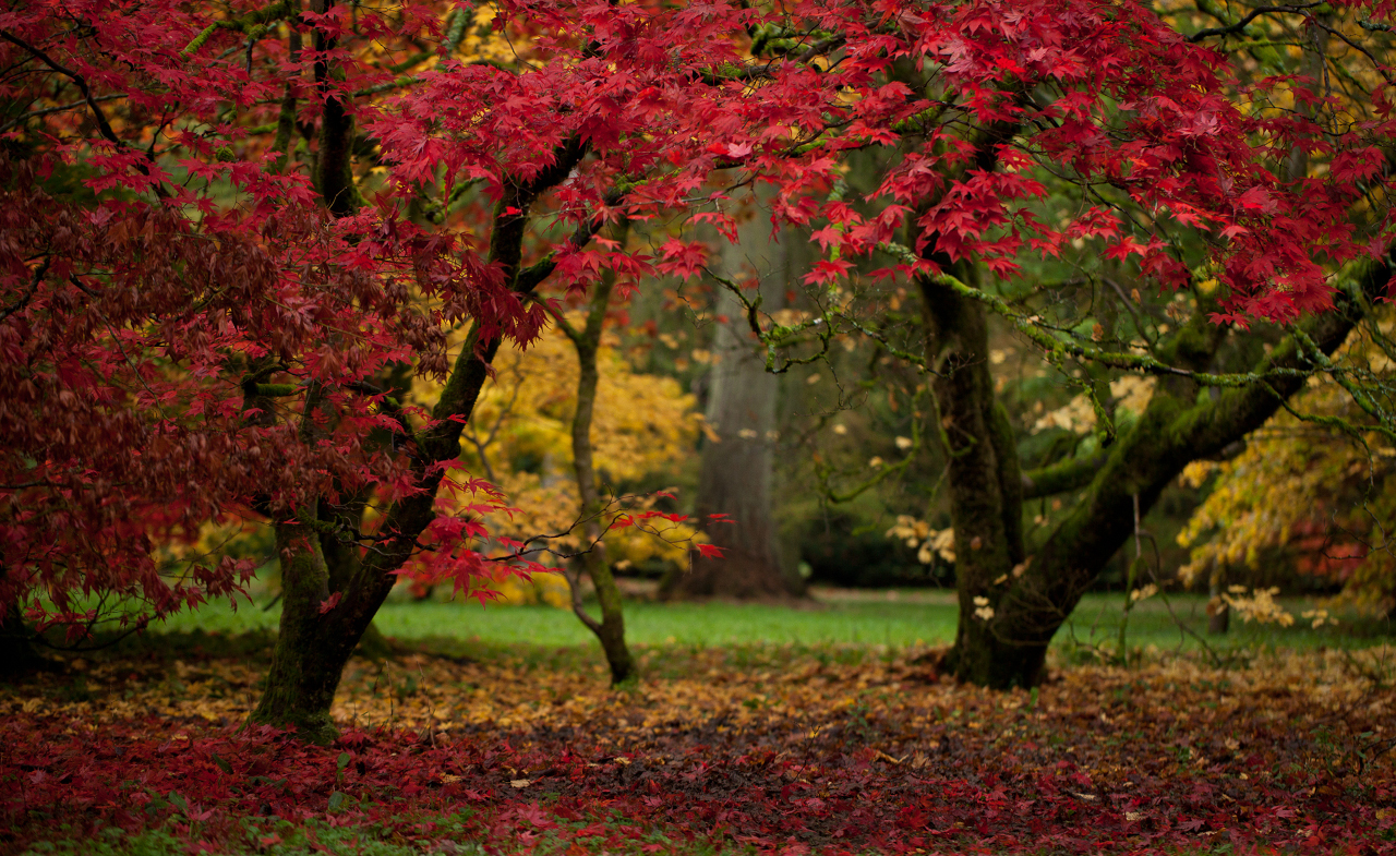 The Westonbirt Arboretum, Costwolds, UK is one of the best places to see fall foliage in Europe. Read this article to see Europe's best places for fall travel. #Europe #fall #fallfoliage #foliage #europefoliage #fallcolors #fallcolours #colours#autumn #uk #england