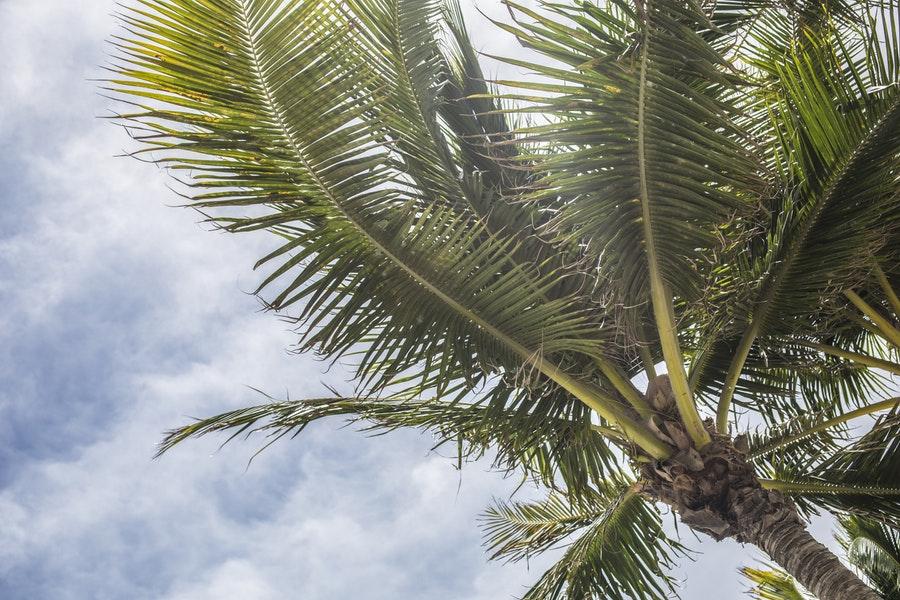palms pexels