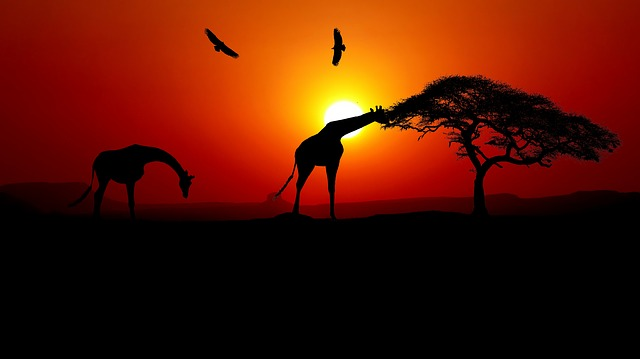 Sunset in Africa - 7 Reasons why Africa should Feature on your Travel Bucket List