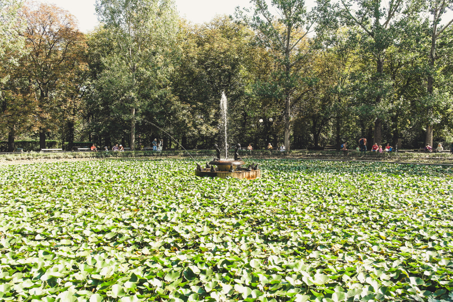The Lake with the Lilies in Borisova Gradina, Sofia. Use this travel guide to Sofia Bulgaria and discover all you need to know about visiting Sofia from a local. #sofia #sofiaguide #sofiatravelguide #sofiabulgaria #bulgaria