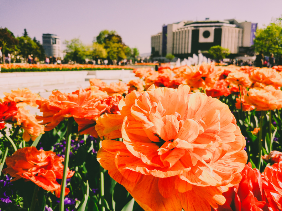 Spring in Sofia - National Palace of Culture in the background. Use this Sofia holiday destination guide when planning your Sofia itinerary. #sofia #sofiaguide #sofiatravelguide #sofiabulgaria #bulgaria