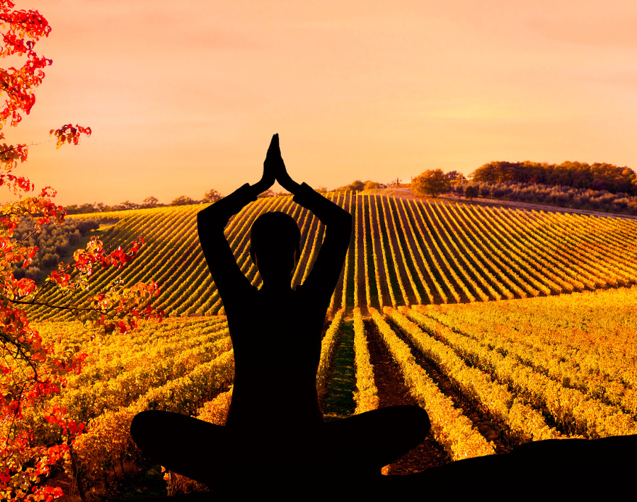 Yoga in the vineyard - Pennsylvania. Unmissable NYC day trips #nyc #daytrip #usa #travel