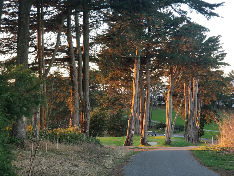 Evening light at the Golden Gate Park. Discover the best places to visit in San Francisco from this insider's guide to San Francisco #sanfrancisco #sf #usa #travel