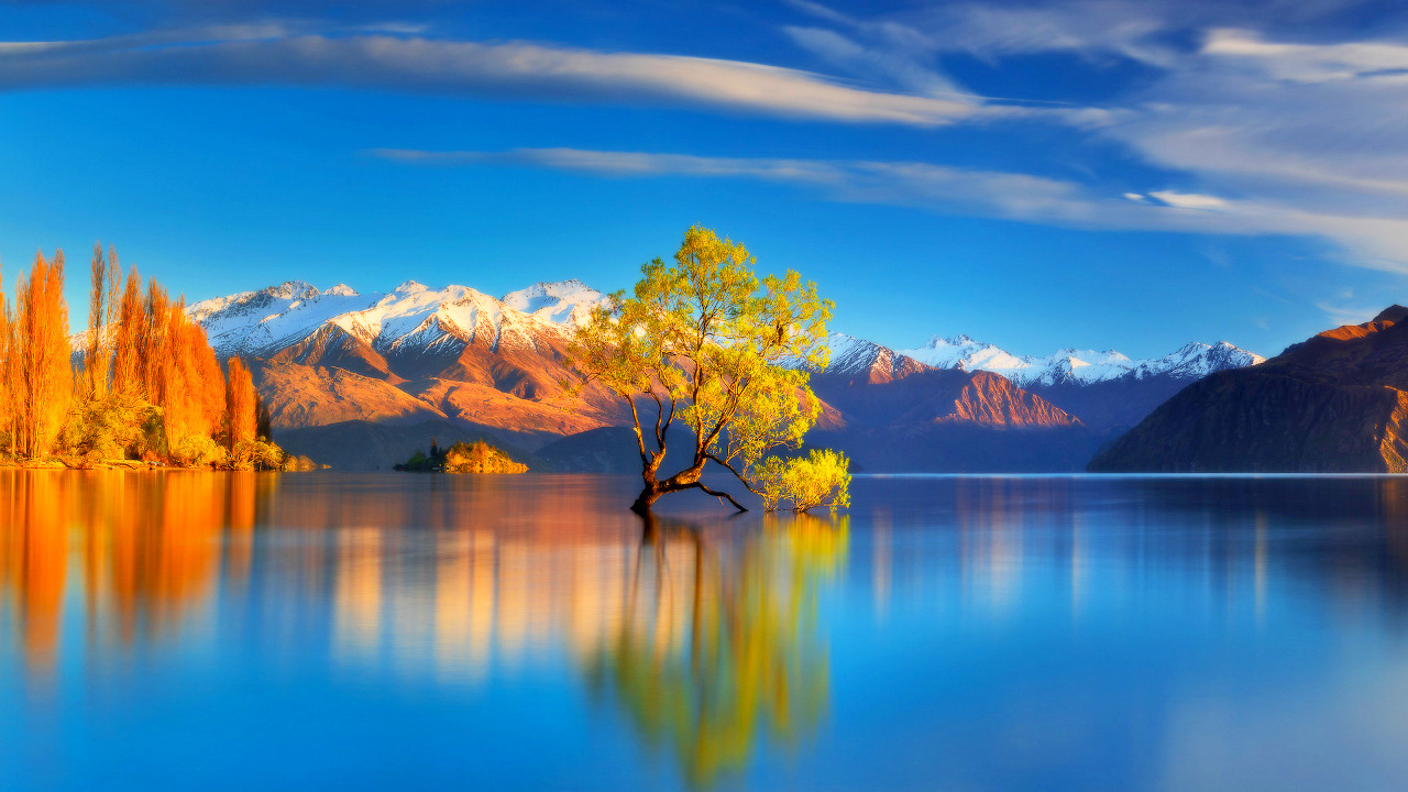 Lake Wanaka tree, New Zealand - is one of the best places to visit in Wanaka. Discover more Wanaka New Zealand things to do from this article. Read it now!