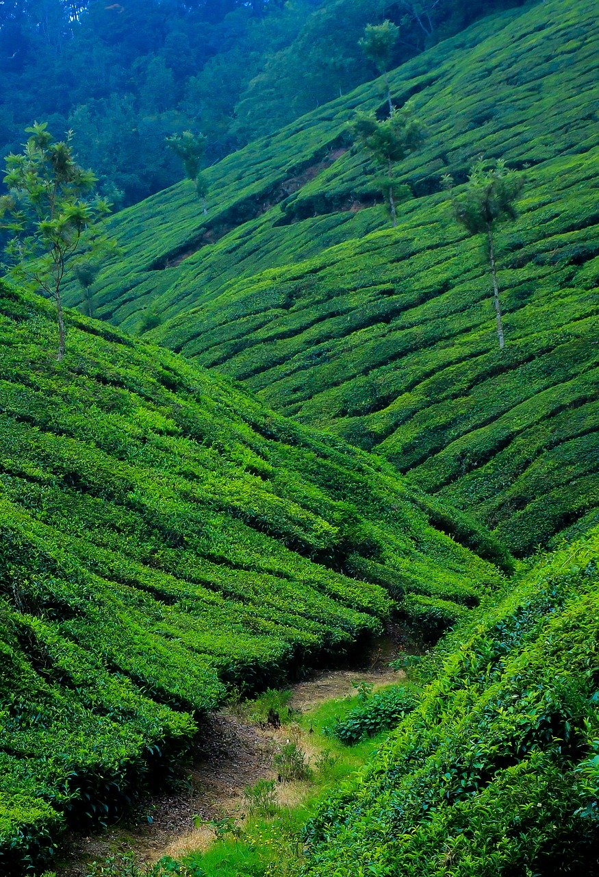 things to do in Kerala for adventure seekers