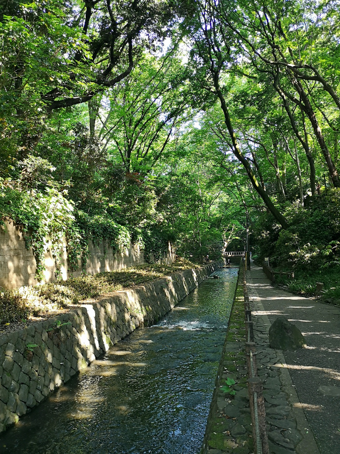 Taking a Walk in Todoroki Valley is one of the top unique things to do in Tokyo, Japan. Here are the top offbeat attractions in Tokyo. Discover them now! #japan #tokyo #tokyothingstodo