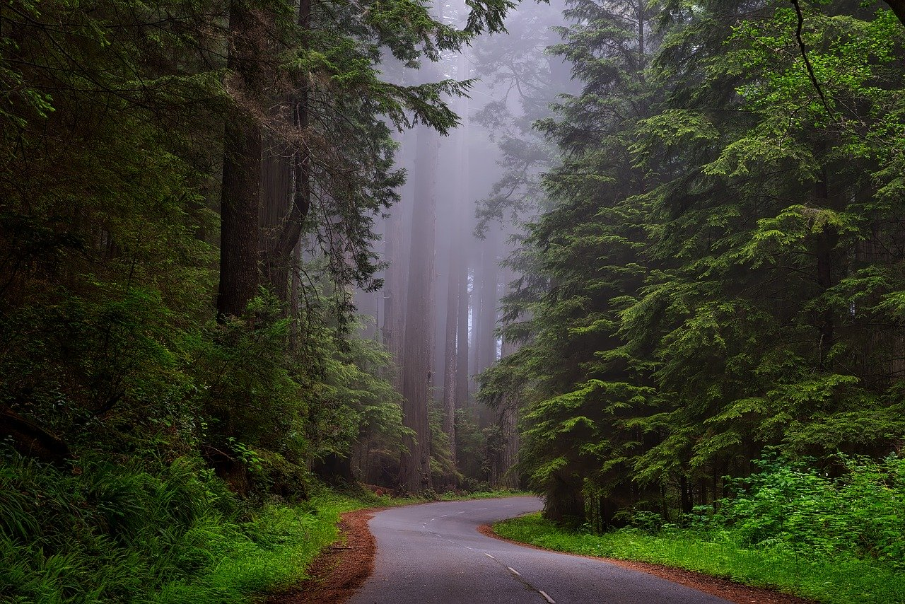 The Redwood National and State Parks in California are one of the best stops on a road trip on the west coast