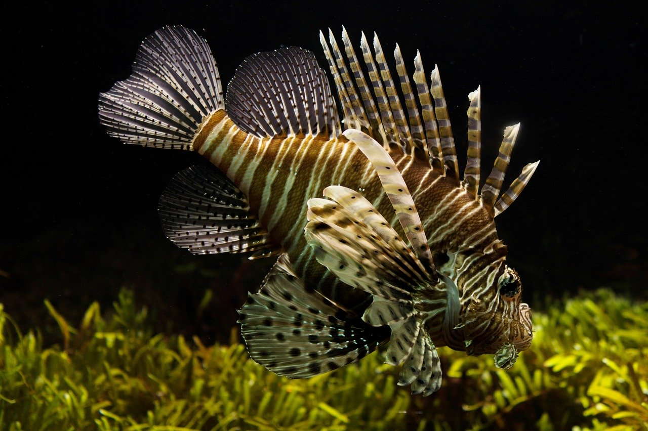 Цинциннати Что делать в Цинциннати? cincinnati lion fish