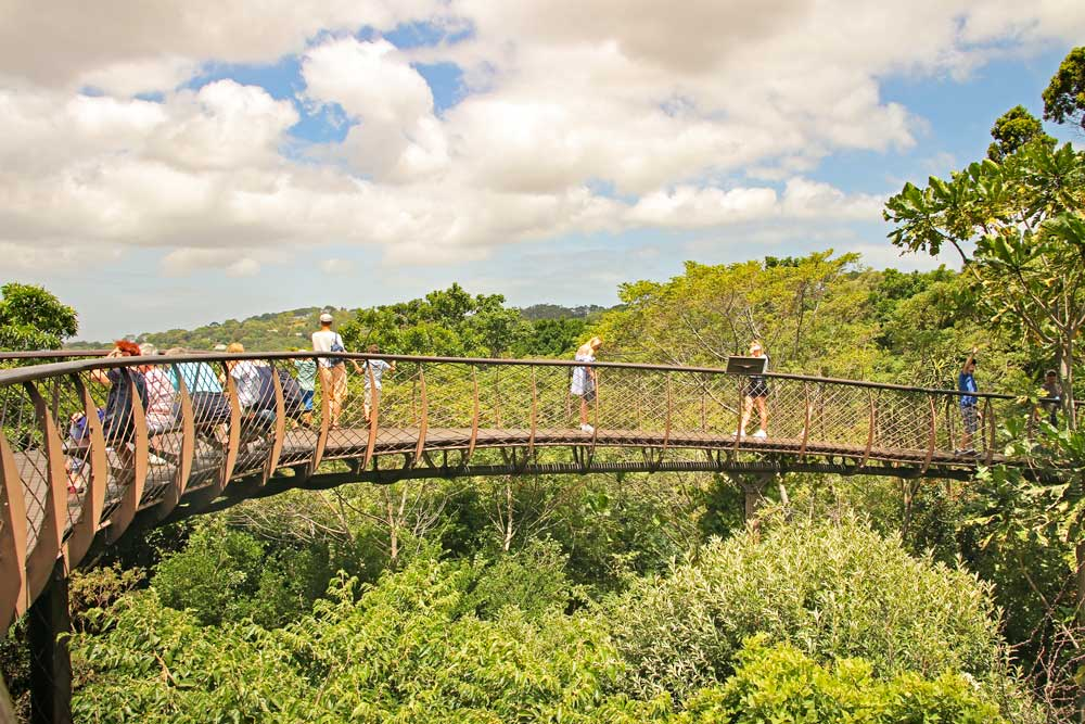 Include the Tree Canopy Walkway Kirstenbosch Botanical Garden on your 2-day Cape Town itinerary