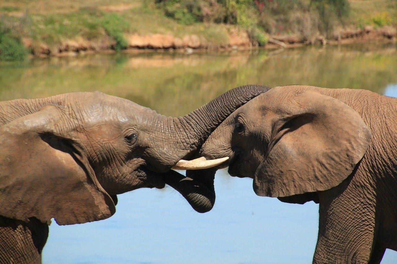Elephants - South African Safari Honeymoon - The Best Destinations Of 2021