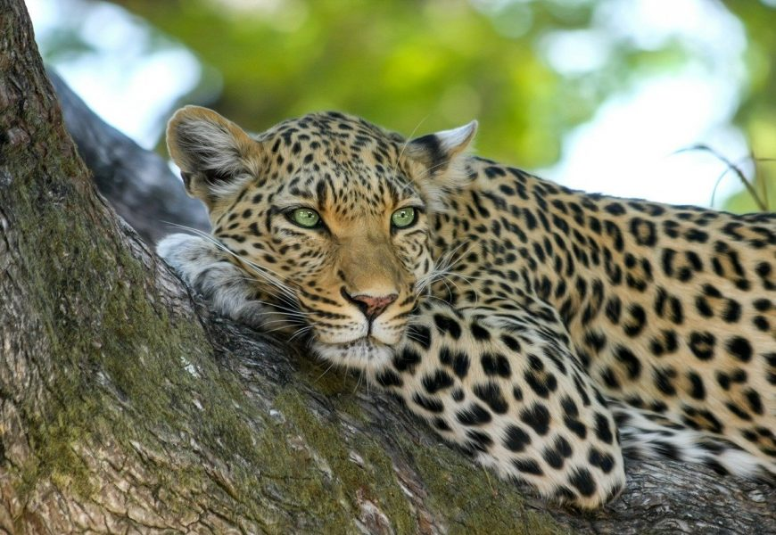 South African Safari Honeymoon – The Best Destinations Of 2021